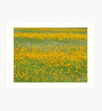 Coreopsis in the Fields Art Print