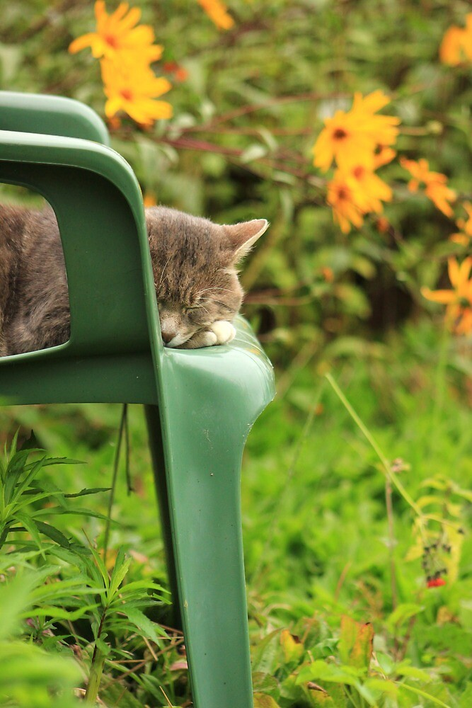 Grey cat in garden with yellow flowers by turniptowers