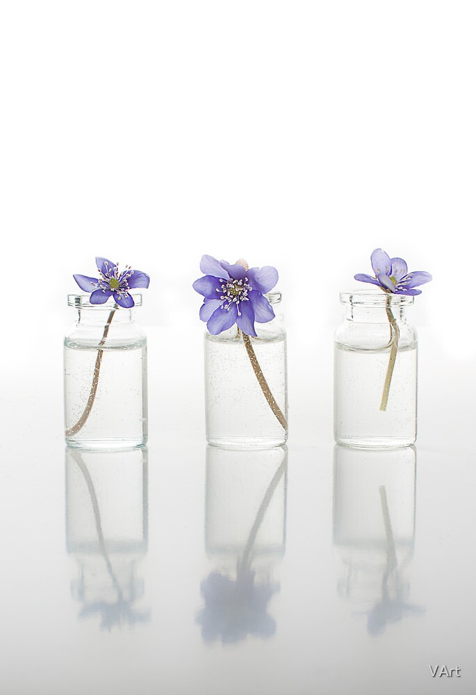 Spring Signs: a triple image of first spring flowers - hepatica by VArt