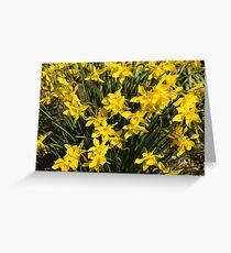 Daffy Daffodils Greeting Card