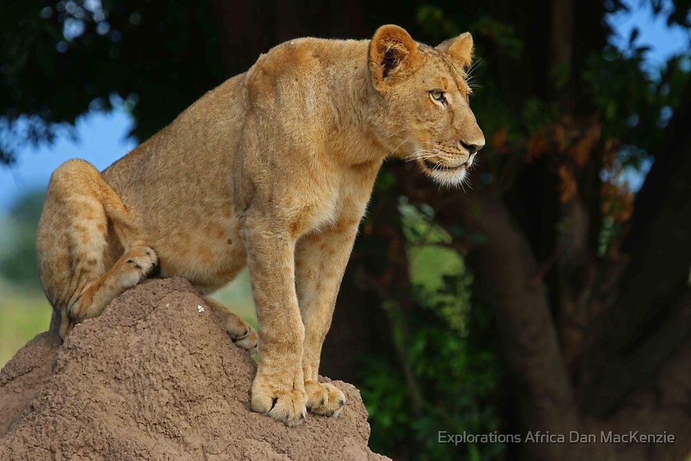 Perch with a view by Explorations Africa Dan MacKenzie