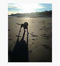 Honey on a sandy beach Photographic Print