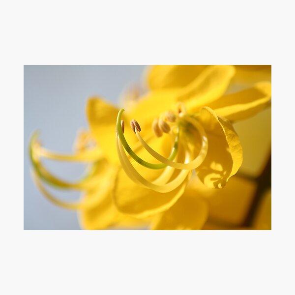 Cassia Fistula - The Yellow Flower Photographic Print