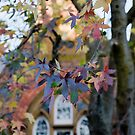 Winter Colour by Jenni Greene
