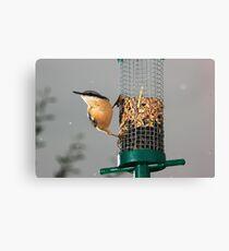 Nuthatch on bird feeder in rain Canvas Print