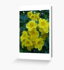 Yellow Elder  Greeting Card