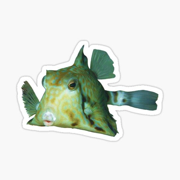 Kofferfisch   Niedlicher Fisch zum Knutschen    Sticker