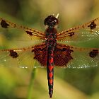 Calico Pennant #2  by Kane Slater