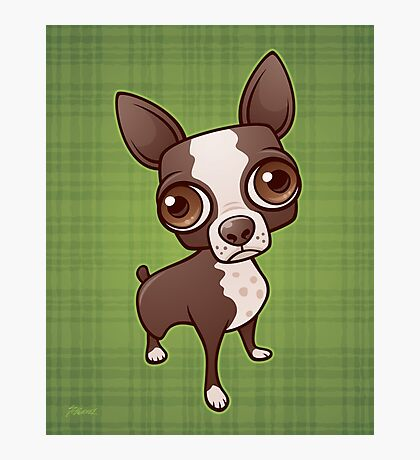 Zippy the Boston Terrier Photographic Print
