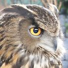 Great horned owl profile by Jackie Popp