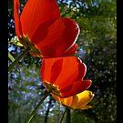 Three tulips, three little brothers by Mac of BIOnighT