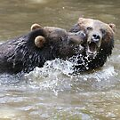 Grizzlis fighting by Yves Roumazeilles