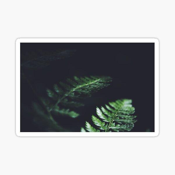 Dark Green Leaves Plant Nature Blur  Sticker