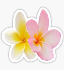 Hawaiian Flower Plumeria 2 Sticker