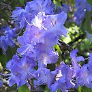 Beautiful in Blue by Pat Yager