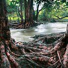 Rapid Creek by DaveBassett