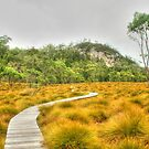 The boardwalk to Snake Hill by Michael Matthews