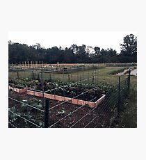 Community Gardens Photographic Print