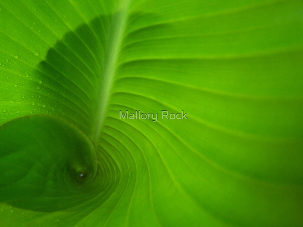 Inside Leaf by Mallory Rock