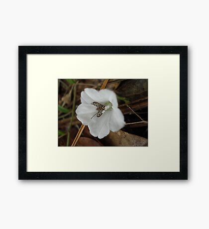 Beefly in Creeping Wildflower Framed Print
