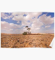 Desert Oasis. Photographed in Israel Poster