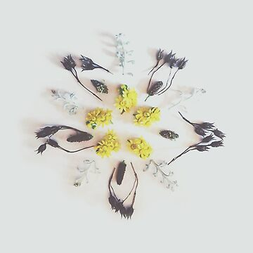 Natures Mandala by muffy79