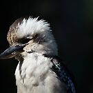 A Breakfast Kookaburra by Hugh Fathers