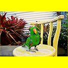 Louis the Eclectus Parrot by jackchlo333