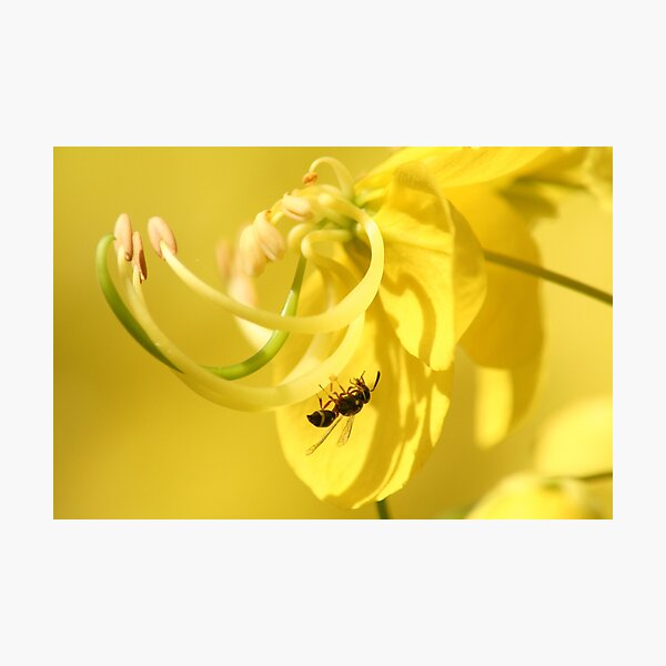 wasp on flower Photographic Print