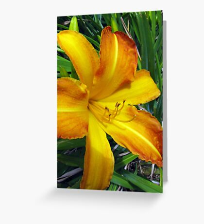 Warm Golden Daylily Greeting Card