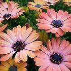 Flower fields by Jamie Lee