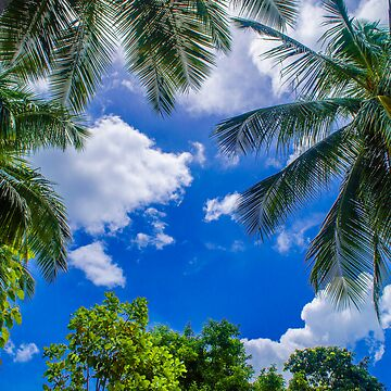 The Palm Sky Blue by Charman69