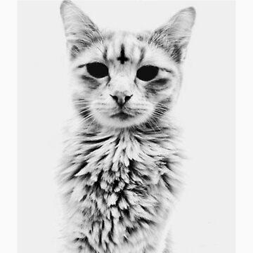 cat by kimi-nig