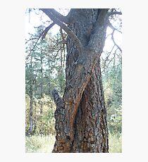 Hugging Tree Photographic Print