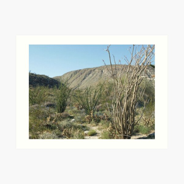 Spring Wildflowers in Anza Borrego State Park Art Print