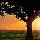 Tree at Sunrise by Brian Gaynor