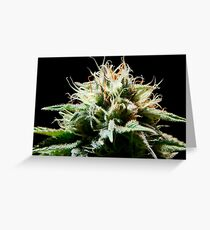 Cannabis Greeting Card