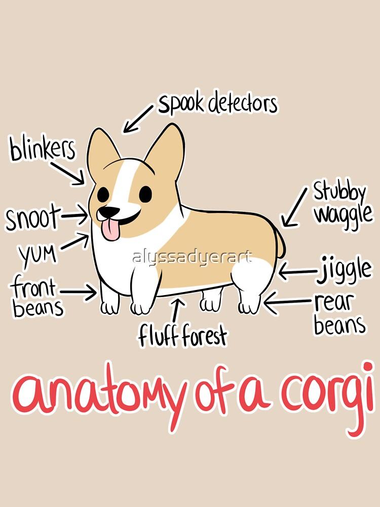 Anatomy of a Corgi by alyssadyerart