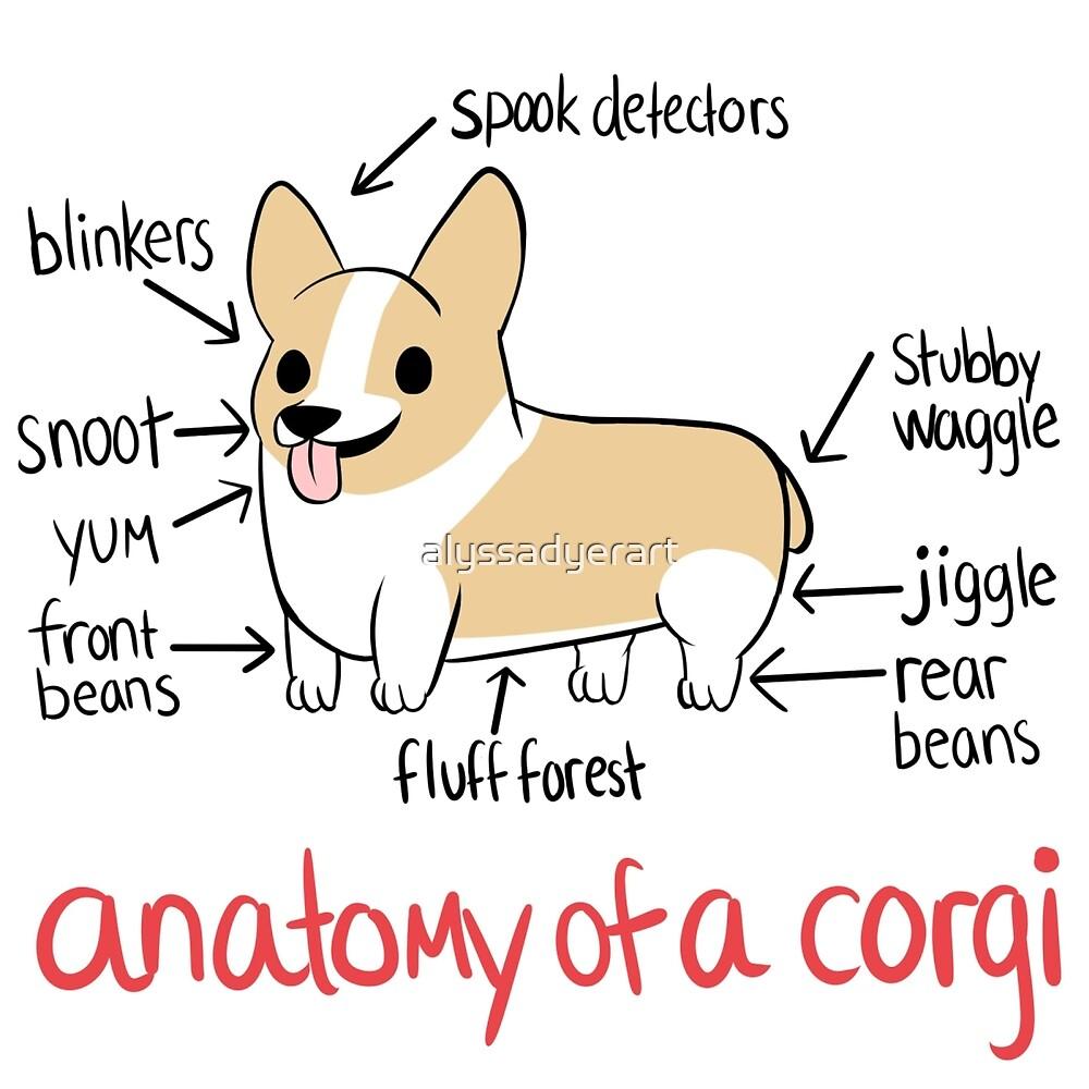 Anatomy of a boob