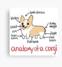 Anatomy of a Corgi Canvas Print