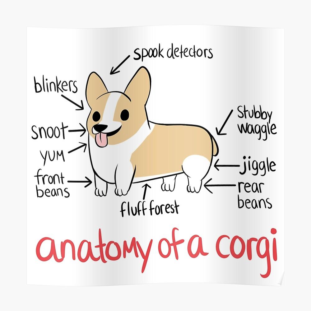 Anatomía de un Corgi Póster