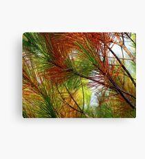 pine brush Canvas Print