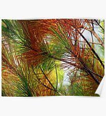 pine brush Poster