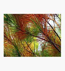pine brush Photographic Print