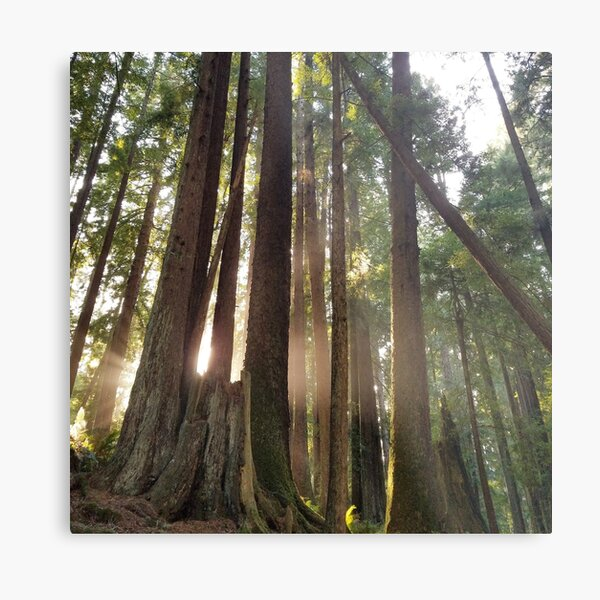 Tree Cathedral Metal Print