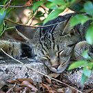 Another Day, Another Nap by Mikell Herrick