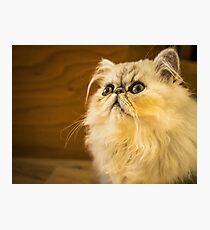 Grumpy Cat is Grumpy Photographic Print