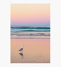 Sunset Gull Photographic Print