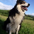 Out with Laddie. by Michael Haslam
