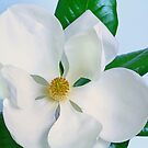 Southern Magnolia by Janice Carter